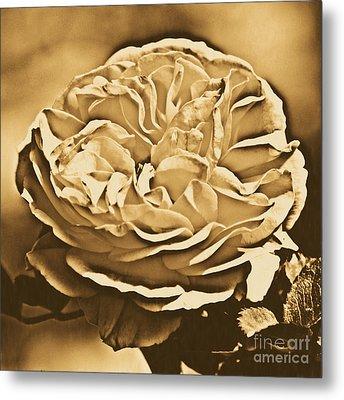 Yellow Rose Of Texas Floral Decor Square Format Rustic Digital Art Metal Print