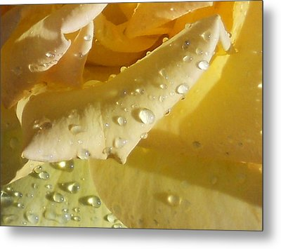 Metal Print featuring the photograph Yellow Rose Raindrops by Diannah Lynch