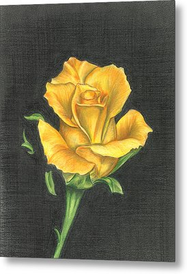 Yellow Rose Metal Print by Troy Levesque