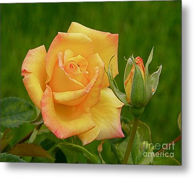 Metal Print featuring the photograph Yellow Rose With Bud by Debby Pueschel
