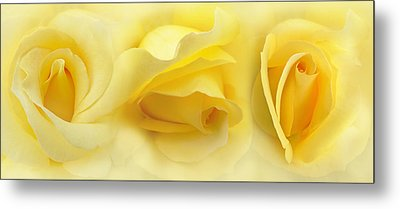 Yellow Roses Triptych Panel Metal Print by Jennie Marie Schell