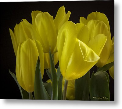 Metal Print featuring the photograph Yellow Silk by Lucinda Walter