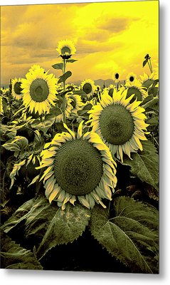 Yellow Sky Yellow Flowers. Metal Print by James Steele