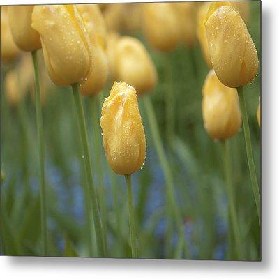 Yellow Spring Metal Print by Sarah Crites