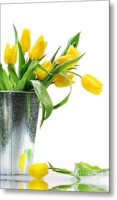 Yellow Spring Tulips Metal Print by Sandra Cunningham