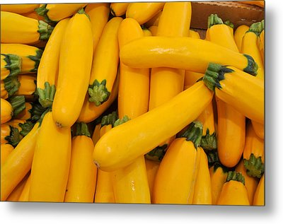 Yellow Summer Squash Metal Print by Diane Lent