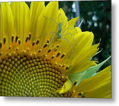 Metal Print featuring the photograph Yellow Sunflower With Green Spider by MM Anderson