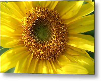 Metal Print featuring the photograph Yellow Sunshine by Neal Eslinger