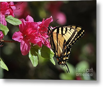 Metal Print featuring the photograph Yellow Tiger Swallowtail Butterfly by Nava Thompson