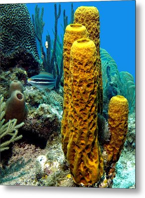 Yellow Tube Sponge Metal Print