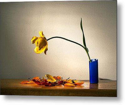Yellow Tulip 2 Metal Print by Ivan Vukelic