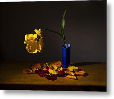 Yellow Tulip Metal Print by Ivan Vukelic