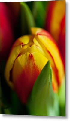Yellow Tulip Metal Print by Sabine Edrissi