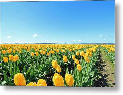 Yellow Tulips Metal Print by E Faithe Lester
