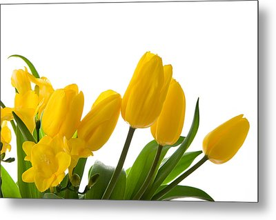 Yellow Tulips On White Metal Print by Anna Kaminska