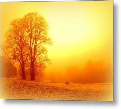 Yellow Winter Sunrise Metal Print
