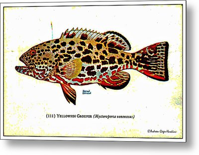 Yellowfin Grouper 1932 Vintage Postcard Metal Print by Audreen Gieger-Hawkins