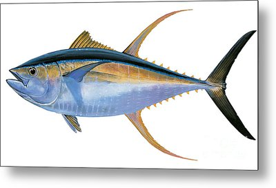 Yellowfin Tuna Metal Print by Carey Chen