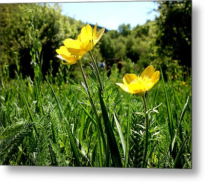 Metal Print featuring the photograph Yellows by Lucy D