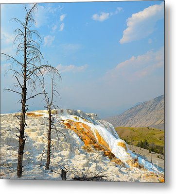 Yellowstone Canary Spring Metal Print