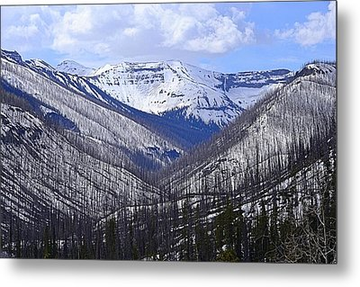 Metal Print featuring the photograph Yellowstone East Entrance Spring by Nadalyn Larsen