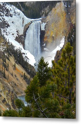Metal Print featuring the photograph Yellowstone Lower Falls In Spring by Michele Myers