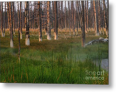Yellowstone Mysterious Morning Metal Print by Teresa Zieba