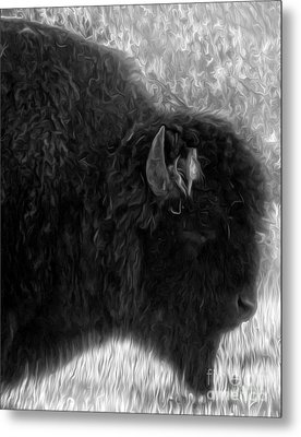 Yellowstone National Park Bison - 02 Metal Print by Gregory Dyer