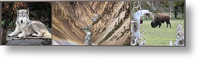 Yellowstone National Park Montana  3 Panel Composite Metal Print by Thomas Woolworth