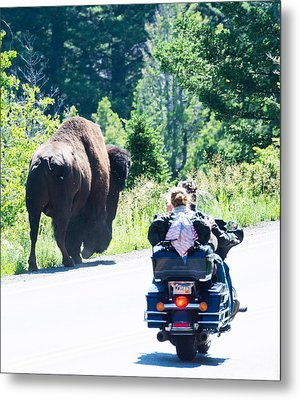 Yellowstone Road Hog Metal Print
