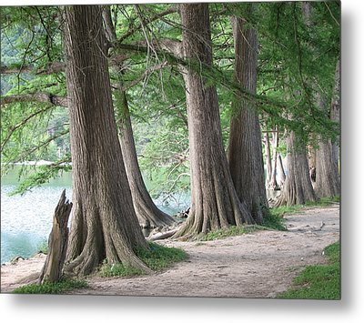 Yesterday's Trees Metal Print