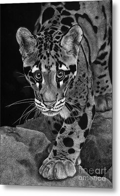 Yim - The Clouded Leopard Metal Print