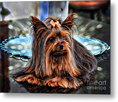 Yorkie Girl  Metal Print