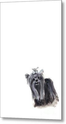 Yorkshire Terrier Metal Print by Barbara Marcus