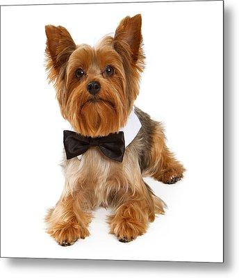 Yorkshire Terrier Dog With Black Tie Metal Print by Susan Schmitz