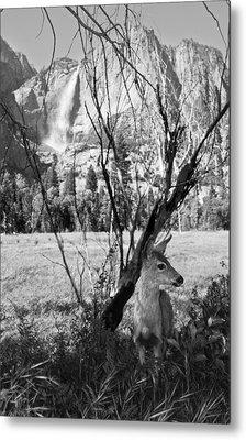 Yosemite Falls And Fawn Metal Print