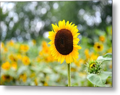 Metal Print featuring the photograph You Are My Sonshine by Linda Mishler