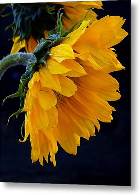Metal Print featuring the photograph You Are My Sunshine by Brenda Pressnall