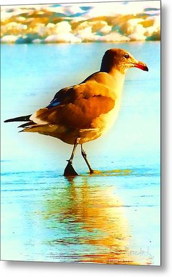 You Are The Only Gull For Me Metal Print by Brian D Meredith