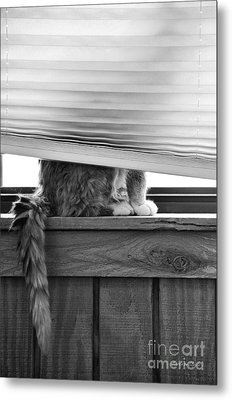 Metal Print featuring the photograph You Can't See Me by Karen Slagle
