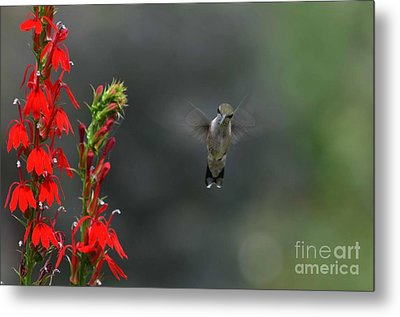 Metal Print featuring the photograph You Looking At Me by Judy Wolinsky