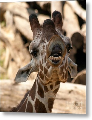 Metal Print featuring the photograph You So Funny by Julie Clements