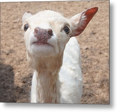 You Talkin To Me? Metal Print by Kristine Bogdanovich