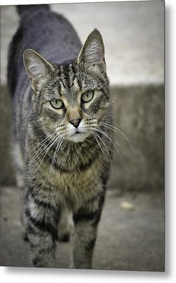You Want A Piece Of Me? Metal Print