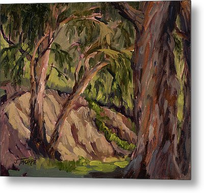 Young And Old Eucalyptus Metal Print by Jane Thorpe
