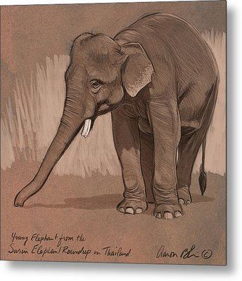 Young Asian Elephant Sketch Metal Print