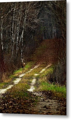 Young Buck And Autumn Metal Print by Thomas Young
