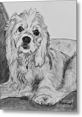 Young Cocker Spaniel Metal Print