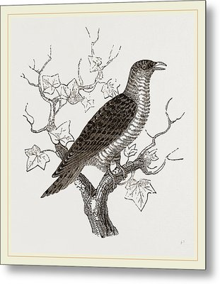 Young Cuckoo Metal Print by Litz Collection