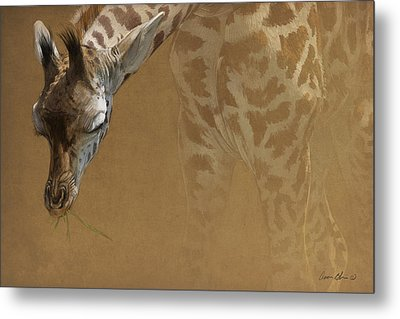 Young Giraffe Metal Print by Aaron Blaise